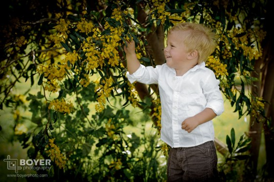 Toddler Portrait by Yellow Flower Tree